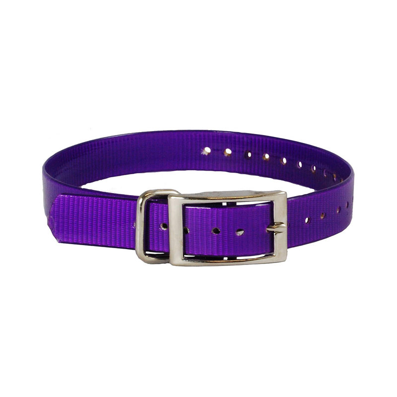 "The Buzzard's Roost Collar Strap 1"" Purple 1"" x 24"""