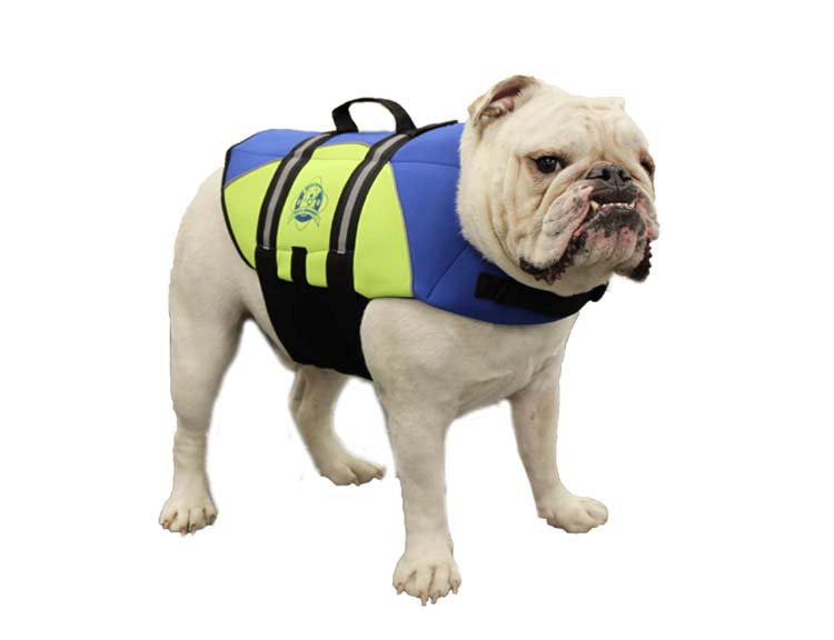 Paws Aboard Dog Life Jacket: Blue & Yellow, Neoprene, Medium