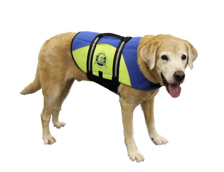 Paws Aboard Dog Life Jacket: Blue & Yellow, Neoprene, XLarge