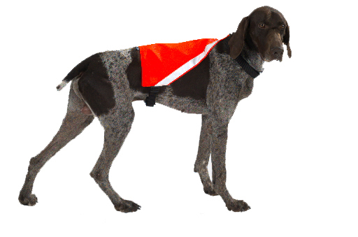 Mendota Pet Visi-Vest: Orange, Medium