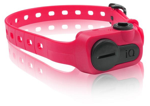 Dogtra iQ No Bark Collar: Pink