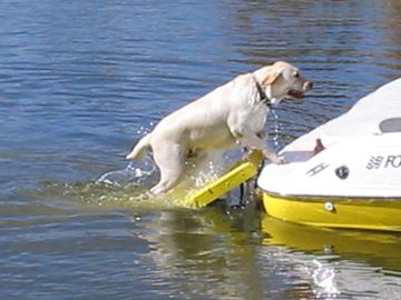 Paws Aboard Doggy Boat Ladder