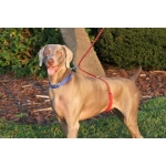 Paws Aboard Monster Walker Dog Leash: Blue/Yellow