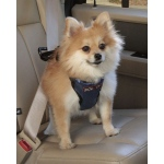Solvit Pet Vehicle Harness: Small