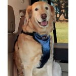 Solvit Pet Vehicle Harness: XLarge