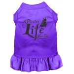 A Pirate's Life Embroidered Dog Dress Purple Med (12)